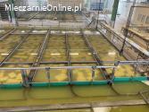 Linia do produkcji sera żóltego